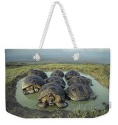 Galapagos Giant Tortoises Wallowing Weekender Tote Bag