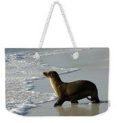 Galapagos Sea Lion In Gardner Bay Weekender Tote Bag
