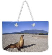 Galapagos Sea Lion Juvenile On Beach Weekender Tote Bag
