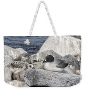 Galapagos Seagull And Her Chick Weekender Tote Bag