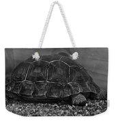 Galapagos Tortoise Baby Weekender Tote Bag