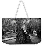 Garden Of Gethsemane Olive Tree Weekender Tote Bag