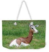 Gazelle At Rest 1 Weekender Tote Bag
