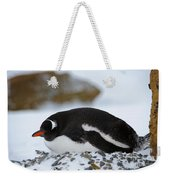 Gentoo Penguin On Nest Weekender Tote Bag