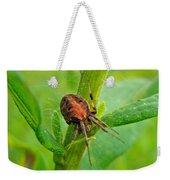 Genus Araneus Orb Weaver Spider - Brown And Orange Weekender Tote Bag