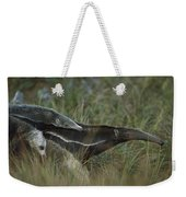 Giant Anteater And  Young In Cerrado Weekender Tote Bag