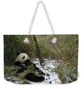 Giant Panda Eating Bamboo Wolong China Weekender Tote Bag