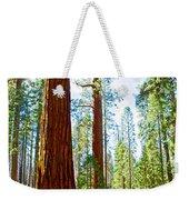 Giant Sequoias In Mariposa Grove In Yosemite National Park-california Weekender Tote Bag