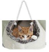 Ginger Kitten In An Igloo Weekender Tote Bag