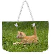 Ginger Tabby Kitten Weekender Tote Bag