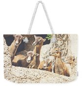 Goats On A Rock Weekender Tote Bag