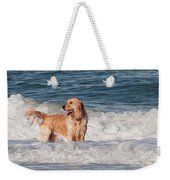 Golden At The Beach Oil Weekender Tote Bag