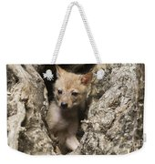 Golden Jackal Canis Aureus Cubs 2 Weekender Tote Bag