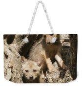 Golden Jackal Canis Aureus Cubs Weekender Tote Bag
