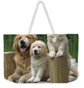 Golden Retriever Dog With Puppies Weekender Tote Bag