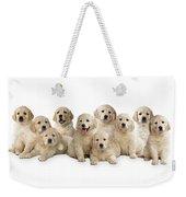 Golden Retriever Puppies, In A Line Weekender Tote Bag