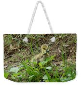 Gosling Chewing On Some Grass Weekender Tote Bag