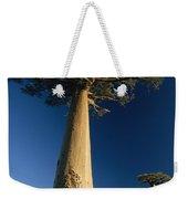 Grandidiers Baobab Trees Madagascar Weekender Tote Bag