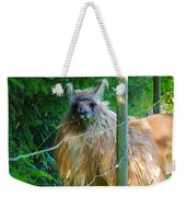 Grass Is Always Greener - Llama Weekender Tote Bag by Jordan Blackstone