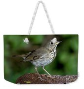 Gray-cheeked Thrush Catharus Minimus Weekender Tote Bag