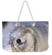 Gray Wolf Canis Lupus Shaking Snow Off Weekender Tote Bag