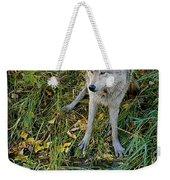 Gray Wolf Drinking Weekender Tote Bag