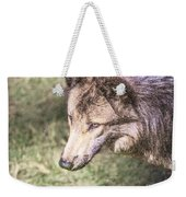 Gray Wolf Grey Wolf Canis Lupus Weekender Tote Bag