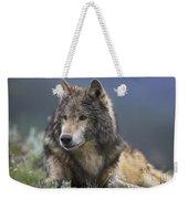Gray Wolf Resting North America Weekender Tote Bag