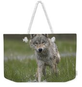 Gray Wolf Walking Through Water Weekender Tote Bag
