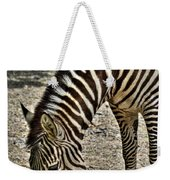 Grazing Zebra At The Buffalo Zoo 2 Weekender Tote Bag