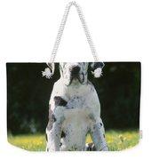 Great Dane Puppy Weekender Tote Bag