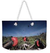 Great Frigatebird Males In Courtship Weekender Tote Bag