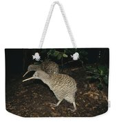 Great Spotted Kiwi Breeding Pair New Weekender Tote Bag