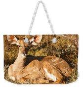 Greater Kudu Calf Weekender Tote Bag