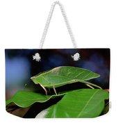 Green Leaf-mimic Katydid Steirodon Weekender Tote Bag