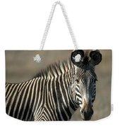Grevys Zebra Standing In Plains Kenya Weekender Tote Bag