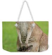 Grey Kangaroo And Joey  Weekender Tote Bag