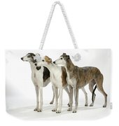 Greyhound Dogs Weekender Tote Bag
