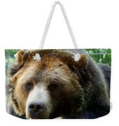 Grizzly Bear At Rest In Colorado Wildneress Weekender Tote Bag