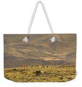 Guanaco Herd, Argentina Weekender Tote Bag