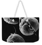 Gyrodinium Dinoflagellates Weekender Tote Bag