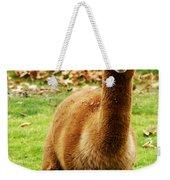 Hairy Brown Gumby Aka Brown Alpaca Weekender Tote Bag