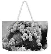Hamster Egg And Cumulus Cells Sem Weekender Tote Bag
