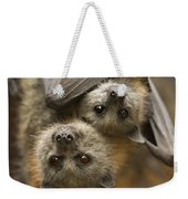 Hang In There Weekender Tote Bag by Mike  Dawson
