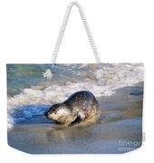 Harbor Seal Weekender Tote Bag