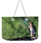 Hawk In Tree Weekender Tote Bag