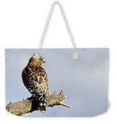 Hawk Looking Back Weekender Tote Bag