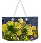 Helleborus Backlight Blossoms 2 Weekender Tote Bag