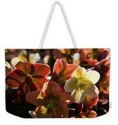 Helleborus Backlight Blossoms Weekender Tote Bag