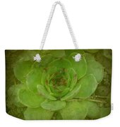 Hen And Chicks Plant Weekender Tote Bag